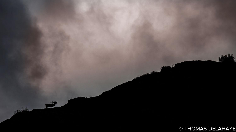 Brame dans la montagne