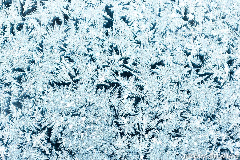Frozen jungle