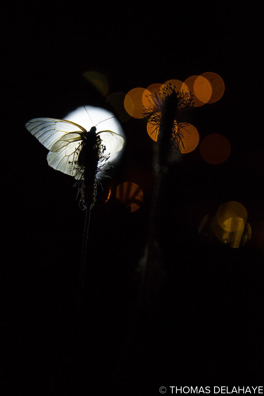 L'ange de nuit