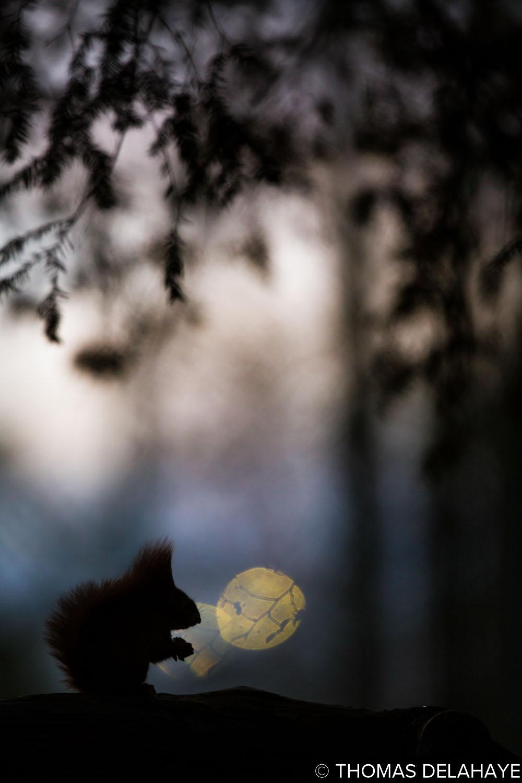 Le souffleur des lunes