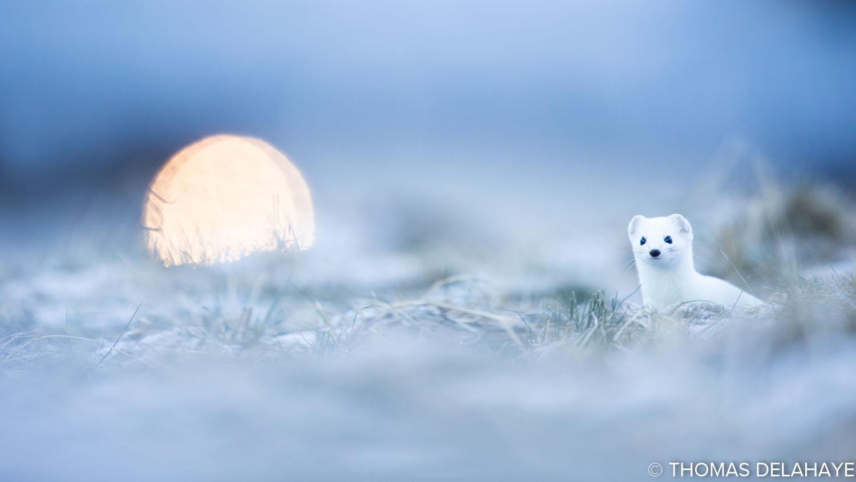 Moonlight rendez vous