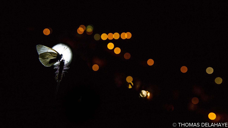 Nuit du Gazé