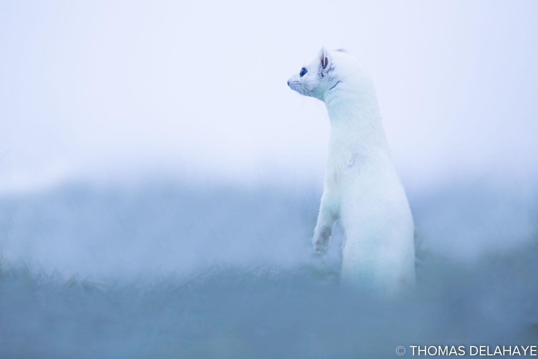Sentinelle Glacée