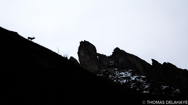un Brame dans la Montagne